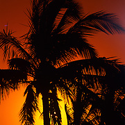 Coconut palm tree and a tropical sunset at Convey Point in Biscayne National Park, FL.