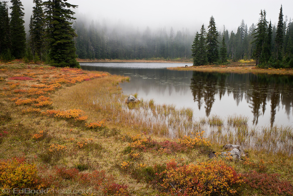 autumn huckleberry colors the shoreline along Junction Lake as clouds move through the Subalpine Fir forest in the Indian Heaven Wilderness - Gifford Pinchot National Forest, Washington state, USA