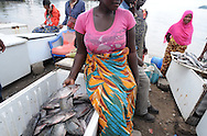MWANZA, TANZANIA.  A woman displays a fresh tilapia at an outdoor market on the shore of Lake Victoria in Mwanza, Tanzania on Thursday, September 4, 2014.  © Chet Gordon/THE IMAGE WORKS
