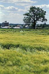 Lanaster county farm scene