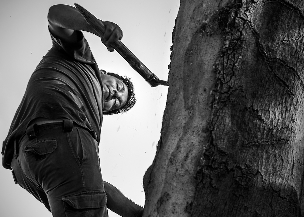 "Included in photographic documentary ""Traditional cork extraction in Portugal"""