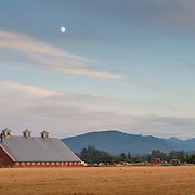 A near-full moon rises at sunset over farmland on the Olympic Peninsula.