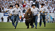 SHOT 9/19/15 5:05:23 PM - Colorado's mascot Ralphie runs on to the field before a game against Colorado State during the Rocky Mountain Showdown at Sports Authority Field at Mile High in Denver, Co. Colorado won the game 27-24 in overtime. (Photo by Marc Piscotty / © 2015)