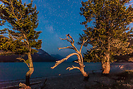 A single image, taken from a time-lapse sequence, of trees lit by nearby lighting, against the backdrop of the Milky Way in twilight, from the campground at Waterton townsite, Waterton Lakes National Park, Alberta. A 20 second exposure at f/4 with the 16-35mm lens and Canon 6D at ISO 3200.