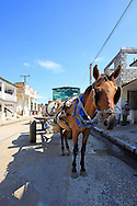 Horse and cart hauling water in Cruces, Cienfuegos Province, Cuba.