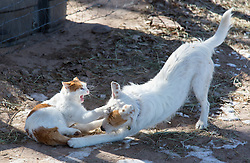 cat and a dog playing together outside