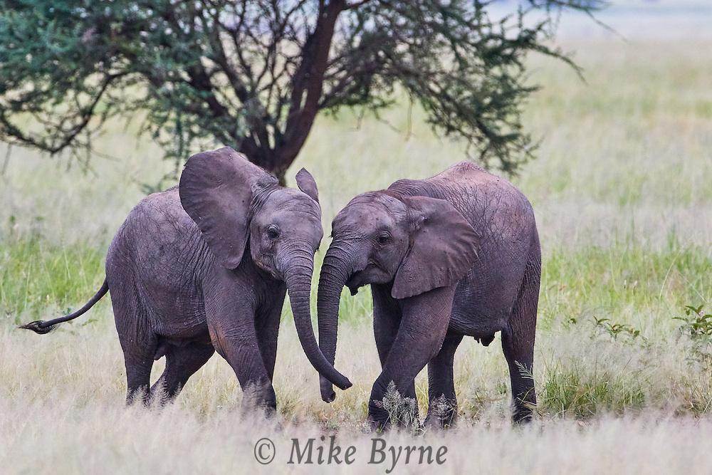 Photos taken in Tarangire National Park, Tanzania.