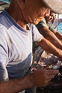Fishermen cleaning a tarpon off the coast of Ciego de Avila in the Cayos de Ana Maria, Cuba.
