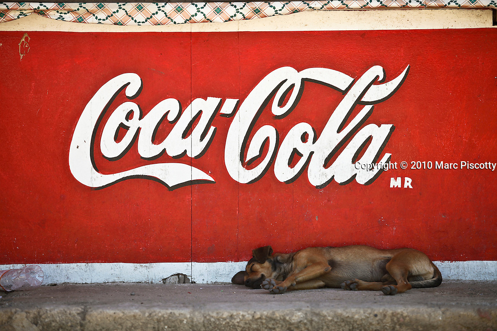 """SHOT 1/22/10 11:32:34 AM - A street dog sleeps under a Coca Cola sign in a street stall one afternoon in Sayulita, Mexico. Stray dogs can be a problem in some Mexican towns and cities but Sayulita has managed to spay and neuter a large number of the strays on the street keeping populations in check. Sayulita is a small fishing village about 25 miles north of downtown Puerto Vallarta in the state of Nayarit, Mexico, with a population of approximately 4,000. Known for its consistent river mouth surf break, roving surfers """"discovered"""" Sayulita in the late 60's with the construction of Mexican Highway 200. In recent years, it has become increasingly popular as a holiday and vacation destination, especially with surfing enthusiasts and American and Canadian tourists. (Photo by Marc Piscotty / © 2009)"""