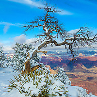 The Grand canyon national park in snow