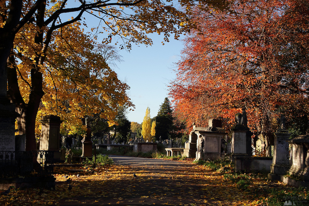 Brompton Cemetery in autumn