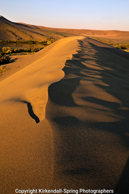 ID00659-00...IDAHO - Early morning light on a sand dune located along the shores of Dune Lake in Bruneau Dunes State Park.