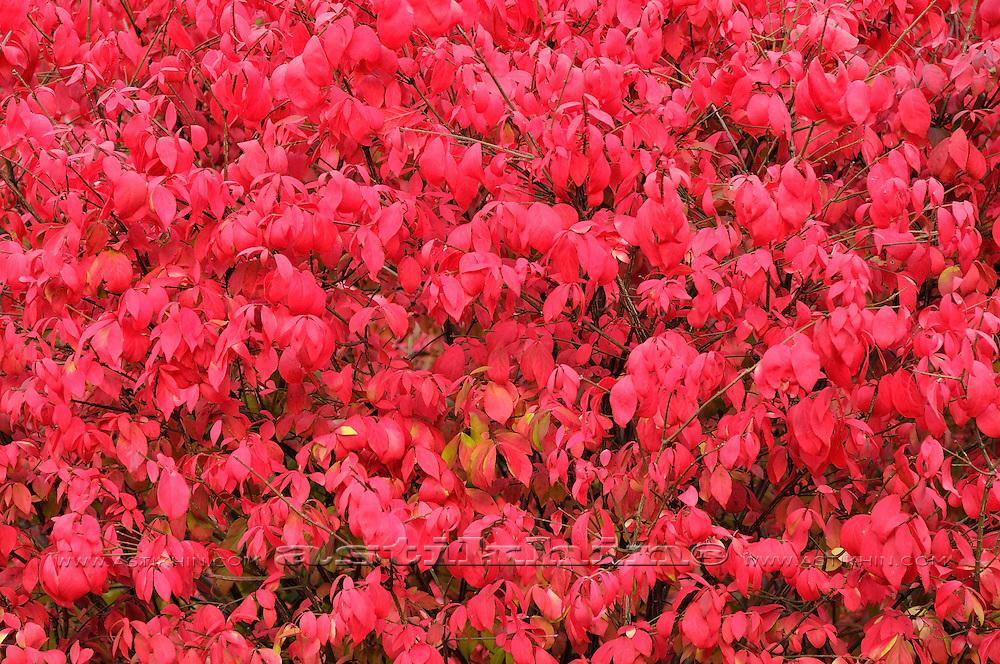 Fall in garden