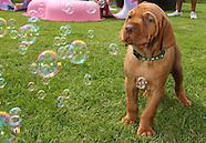 Puppy Bubbles