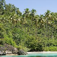 Cocotiers dans l'archipel des Banggai