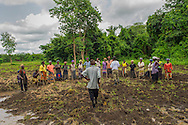Molai Tejan Kanu teaches fellow Sierra Leonean farmers improved techniques for rice growing.