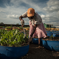 A woman takes care of her plants at a make shift farm in the neighborhood of Cite Soleil in Port-au-Prince, Haiti January 31, 2012. Photo by Ken Cedeno