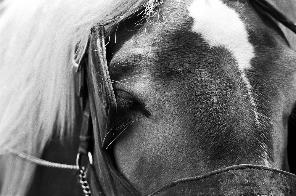 A close up of a horses head.