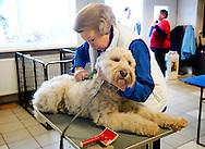 MOLENSCHOT - Koningin Beatrix kamt een hond in het hondentrainingscentrum in Molenschot. De koningin hielp vrijdag mee in het kader van het landelijke vrijwilligersproject NL DOET.