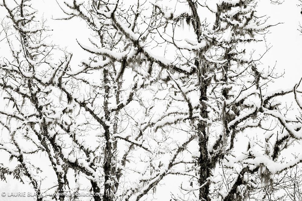 B&W winter landscape fine art photo 5