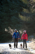 Walkers in Cardrona,  Tweed Valley, Forestry Commission, Scotland