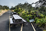 Crater Rim Trail follows an overgrown road near Kilauea Visitor Center, Hawaii Volcanoes National Park, on the Big Island, Hawaii, USA. Growing into the former road beside the picnic tables is the common local fern Dicranopteris linearis, known as Old World forked fern, uluhe (Hawaiian), dilim (Filipino), Climbing Fern, or False Staghorn. As a pioneer species in ecological succession, it can colonize bare lava flows, talus, and abandoned roads. Intolerant of shade, it climbs over other plants to reach direct sunlight. The stem grows from the rhizome, branches at a 45° angle, and forms fronds that continue to bud and branch at great length, 20+ feet. Where humans eliminate the fern, invasive non-native species of plants often move in. This plant is a keystone species in Hawaiian ecosystems and often forms deep thickets. Dicranopteris linearis is widely distributed in the wet Old World tropics, Polynesia and the Pacific. Established in 1916 and later expanded, the park (HVNP) encompasses two active volcanoes: Kilauea, one of the world's most active volcanoes, and Mauna Loa, the world's most massive shield volcano. The park portrays the birth of the Hawaiian Islands with dramatic volcanic landscapes, native flora and fauna, and glowing flowing lava. HVNP is honored as a UNESCO World Heritage Site and International Biosphere Reserve.