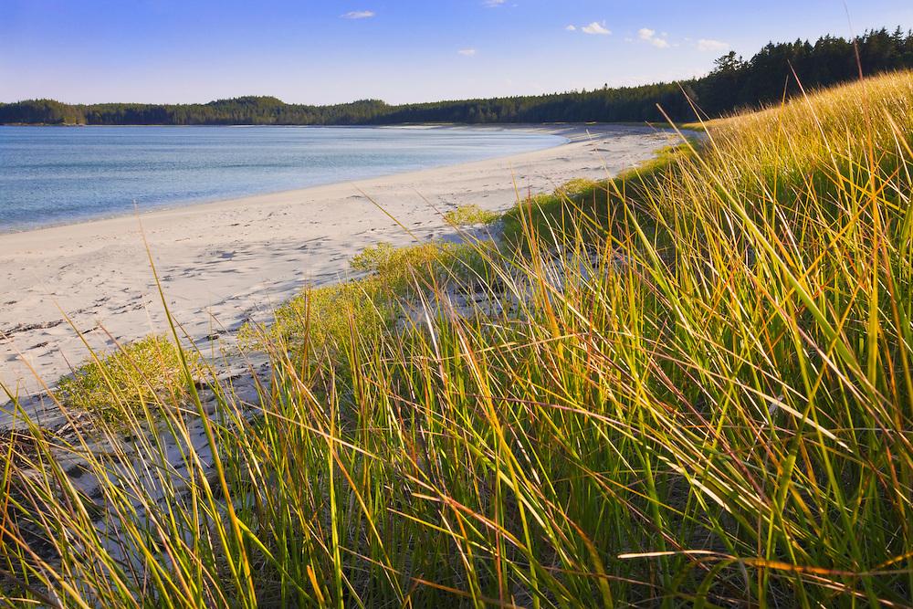0902-1018  Mile-long Great Beach; Roque Island; Maine.   Beach grass, Ammophila breviligulata.