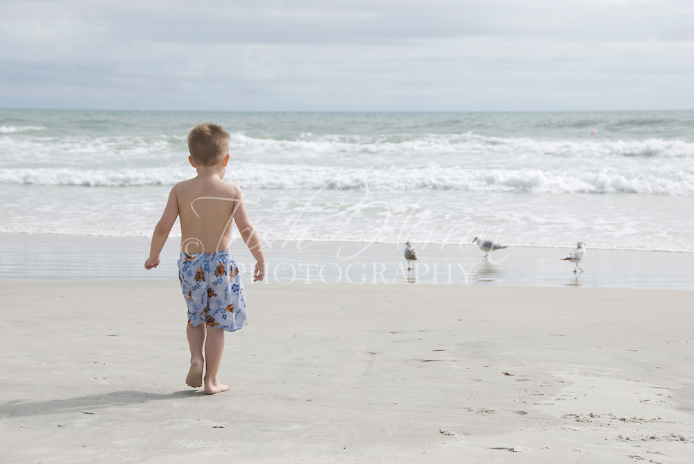 A young boy walks toward three gulls at the beach.