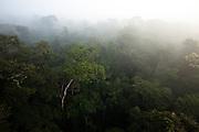 Rainforest in the morning mist. Cristalino State Park, Alta Floresta, Mato Grosso,  Brazil, March 20, 2009.