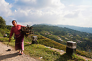 A Nepali woman carries a small bundle of firewood.