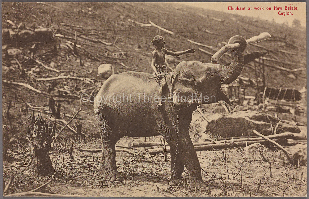 Elephant at work on new estate in Ceylon. A.W.A. Pl&acirc;t&eacute; &amp; Co. 1907 - 1918<br />