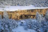 Colorado. Spruce tree house in Mesa Verde National Park, built by ancestral Puebloans, circa 1190-1270 AD, established as a National Park in 1906