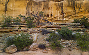 Escalante/Grand Staircase National Monument, Utah