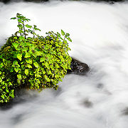 SHOT 5/30/13 12:08:31 PM - Plants grow in the middle of a rushing stream below Wahkeena Falls. Wahkeena Falls is a 242 foot waterfall in the Columbia River Gorge in the state of Oregon. Wahkeena Falls is along the Historic Columbia River Highway, about 13 miles (21 km) east of Troutdale, Oregon. Oregon is a state in the Pacific Northwest region of the United States. Oregon is the 9th most expansive and the 27th most populous of the 50 United States. (Photo by Marc Piscotty / © 2013)