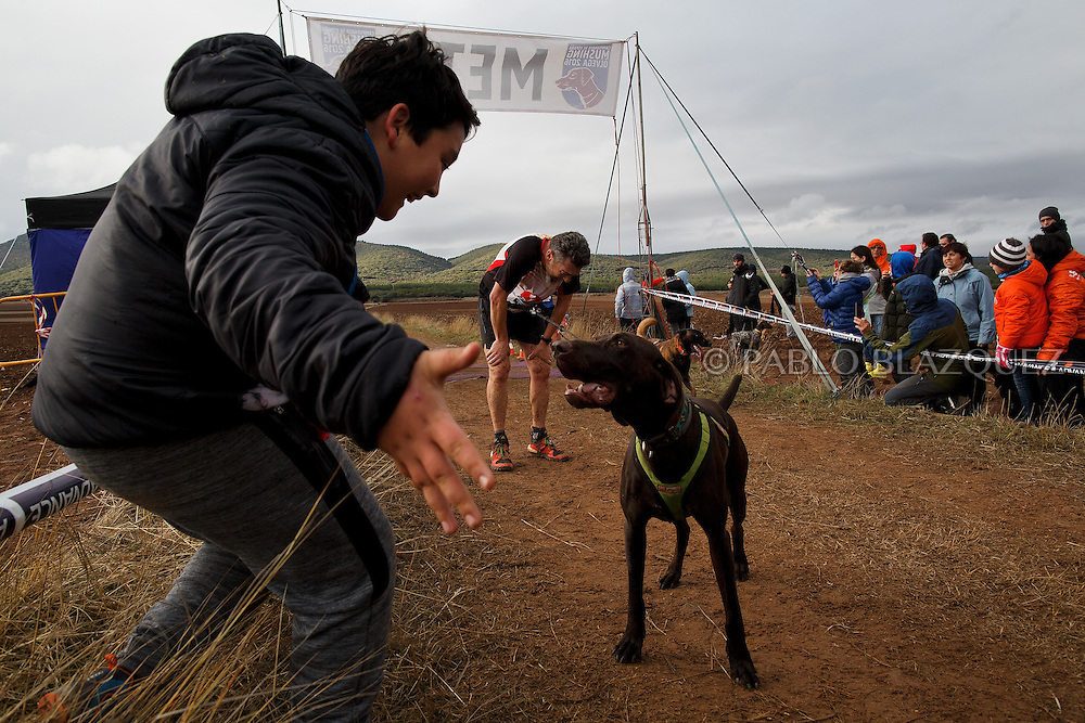 04/12/2016. Sledders and their dogs react as they arrive to the finish line during the Spanish National Mushing Contest on December 4, 2016 in Olvega, in Soria province, Spain. Around 300 competitors and a thousand dogs attended to the competition. (© Pablo Blazquez)