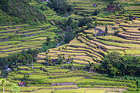Hungduan Hapao rice terraces near Banaue is expansive with scattered village huts between the paddy. They were built by the Ifugao tribe that have lived in these mountains for thousands of years.  The Ifugao have passed on their skills from generation to generation. The Banaue Ifugao Rice Terraces show how an ancient culture can survive despite modernization even today.