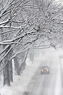 Tree limbs above are weighed down by a heavy snowfall as sparse traffic below heads down a suburban street outside of Chicago.