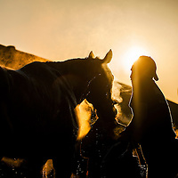 Horses bathe at Churchill Downs in Louisville, KY on May 01, 2013. (Alex Evers/ Eclipse Sportswire)