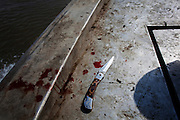 A knife lies by drops of blood on the bow of the boat as Julius and Rebel hunt for alligators near Shell Island, Louisiana on Saturday, September 19, 2009. After an alligator is caught the hunters cut a small slit in its tail through which they put a numbered tag, in accordance with the hunting regulations.