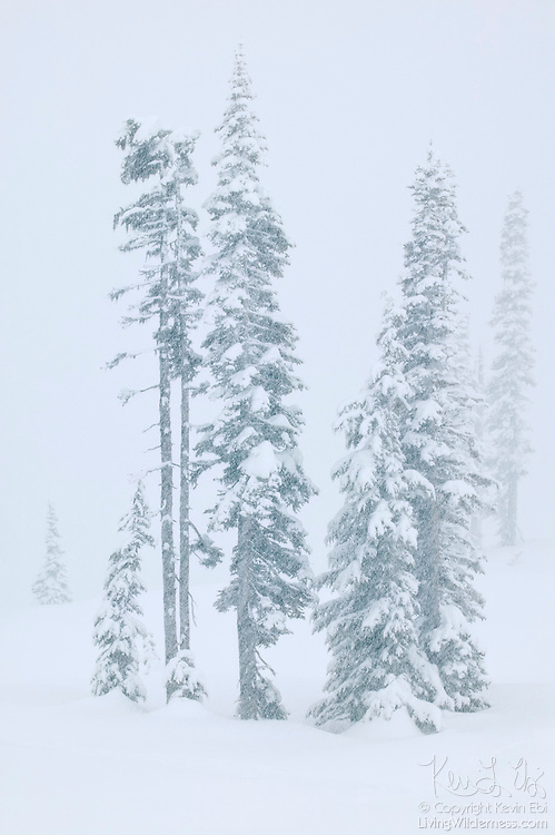 A blizzard results in very heavy snowfall and near whiteout conditions at Paradise in Mount Rainier National Park, Washington. Paradise is the snowiest place in the United States, receiving an average of 676.2 inches (1717.5 cm) of snow per year.