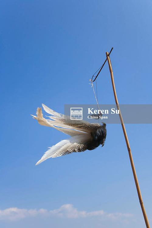 Feather praying for good luck, Kengtung, Myanmar