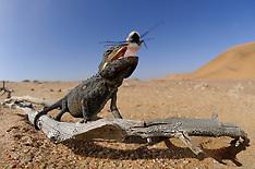Namib Desert | Namib Wüste
