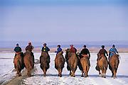 Bactrian camels (Camels bactrians) &amp; nomads<br /> Gobi Desert<br /> Mongolia