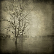 Two big trees standing on the flooded river banks of the Rhine near D&uuml;sseldorf/Germany<br /> processed with some o f my textures<br /> http://wuestenhagen-imagery.photoshelter.com/gallery/build-your-own-texture-pack/G0000xDMZy8ikUBs