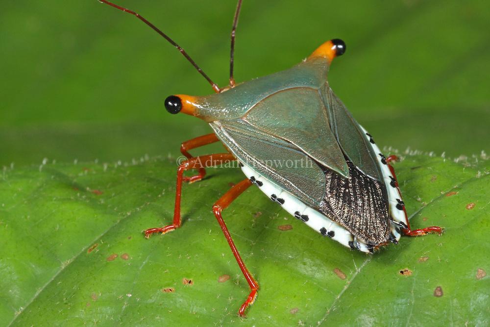Bug, Inc. Paper
