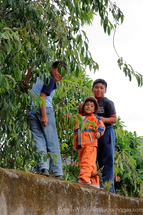 South America, Ecuador, Cusin. Kids on wall picking nuts in Cusin, a small town in the Ecuadorian Andes.