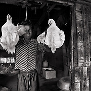 Mohammad Al-amin Islam (10) operates a small poultry farm jointly with his father (Md. Shafiqul Islam) in Gabura. They have been victimized by several cyclones. His father received micro loans and started this business. Image © Mohammad Rakibul Hasan/Falcon Photo Agency