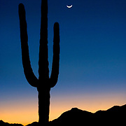 Silhouette of a saguaro cactus at dusk on South Mountain Park and Preserve in Phoenix, Arizona.