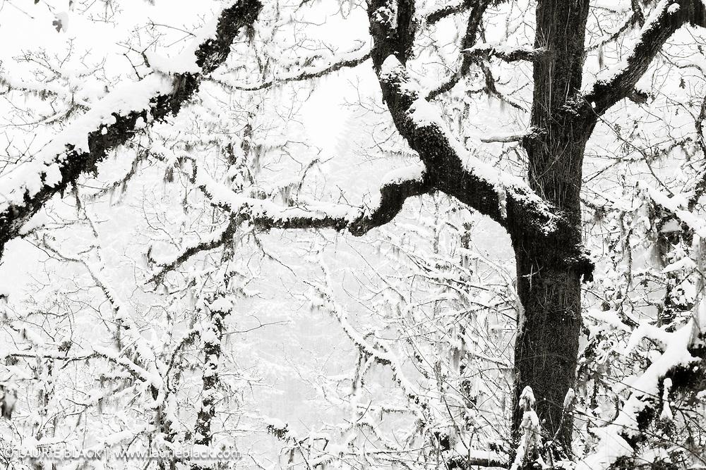 B&W winter landscape fine art photo 6