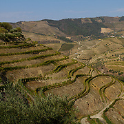 There is archaeological evidence for winemaking in the Duoro region dating from the end of the Western Roman Empire, during the 3rd and 4th centuries AD, although grape seeds have also been found at older archaeological sites.